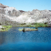 The landslide formed more than 130 new ponds. Stable wetlands were important sites for plant colonization.