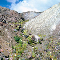Plants also established between small hills formed by chunks of the collapsing volcano.