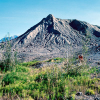 The springs acted as oases of habitat in the barren valley [Nine years after eruption]