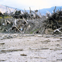 The landslide swept away trees and other vegetation depositing them in a massive debris pile downstream.