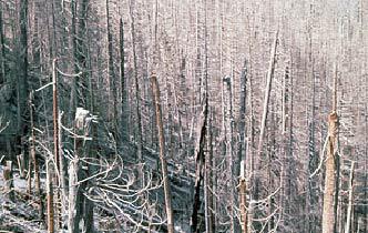 Scorch <br/> (Standing Dead Tree Zone)